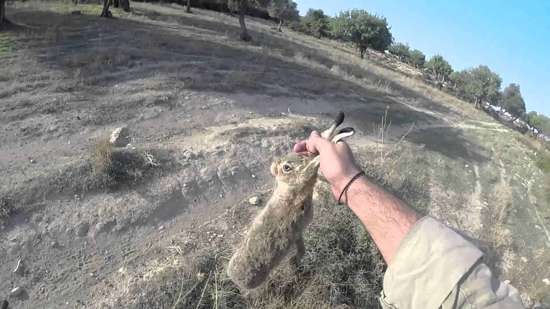 Hare Hunting Cyprus –